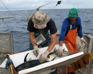 Observadores de pesca OFERTA DE EMPLEO!!!